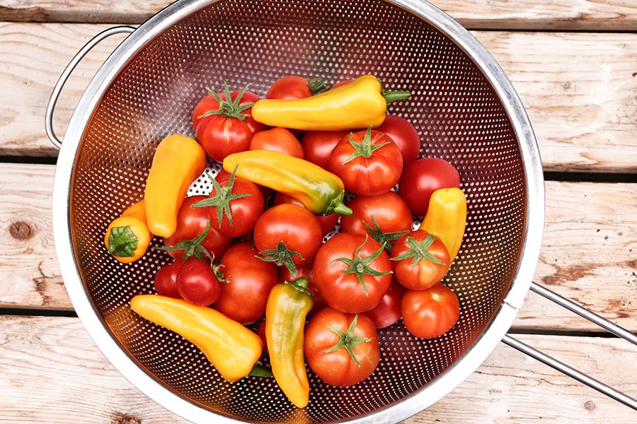 cucina a base vegetale
